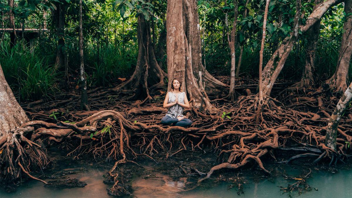 Meditating%20in%20the%20Swamp